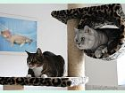Hotel Mastibe: Miky a Čiko