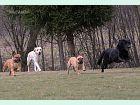 Hotel Mastibe: Jimmy, Annie, Mufík a Lassie